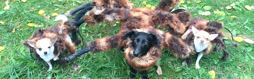 Mutant Giant Spider Dog Comes to the Czech Republic