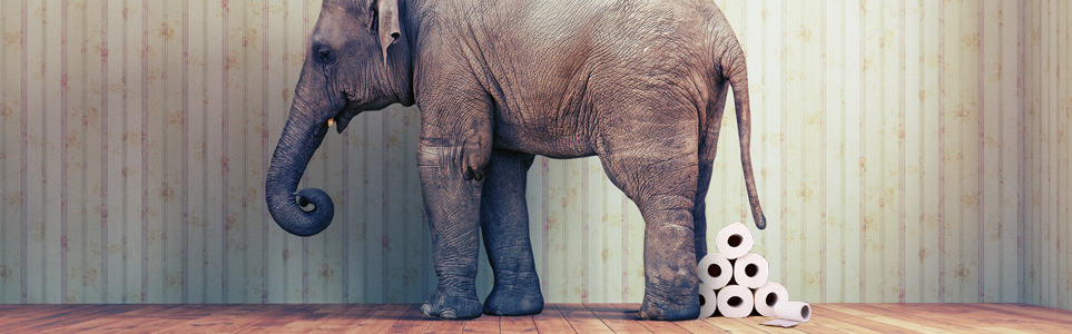 Prague Zoo to Make Elephant Poo Paper