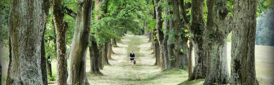 Most Beautiful Czech Tree Lane Competition Begins