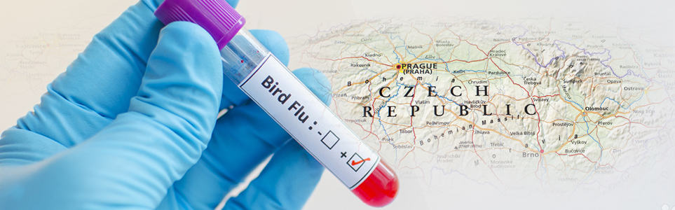 New Cases of Bird Flu Reported in Czech Republic