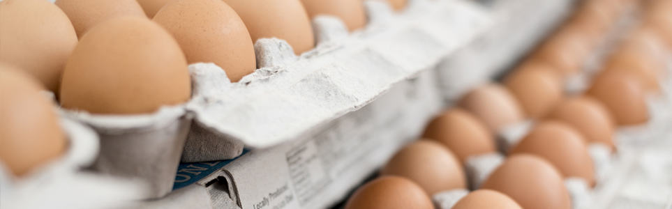 Polish Eggs Recalled in Czech Republic Due to Salmonella Threat