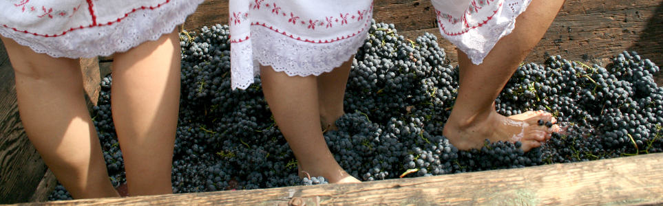 Moravian Winemaking Tradition Calls for Supple Lady Feet