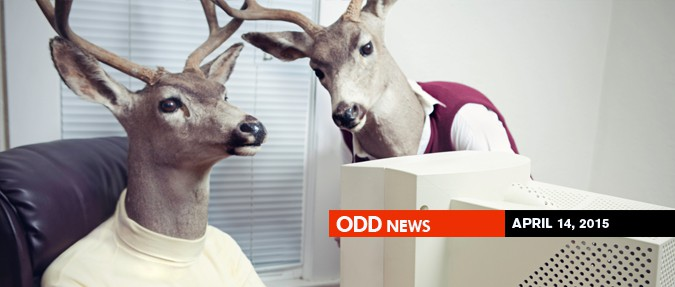 Odd Czech News: April 14, 2015