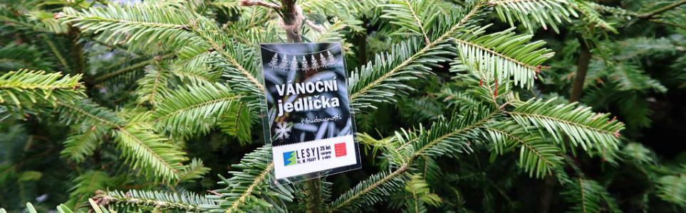 Now On Sale In Prague, Eco-Friendly Christmas Trees with an Afterlife