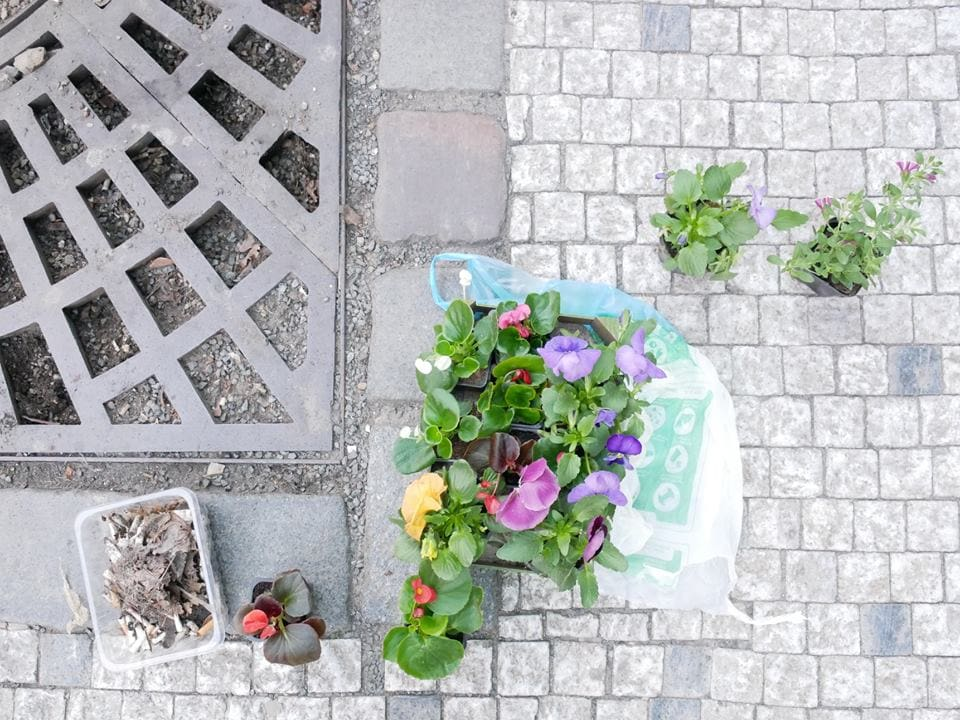 Exchanging cigarette butts for flower beds in Prague