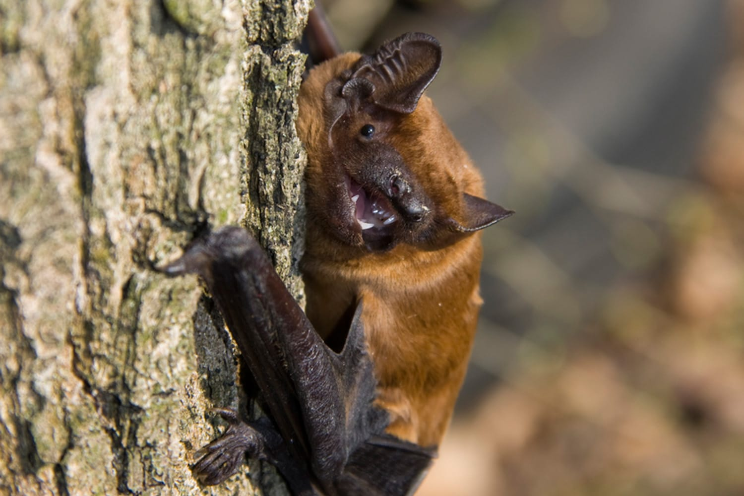 Dozens of bats released in Prague's Stromovka Park