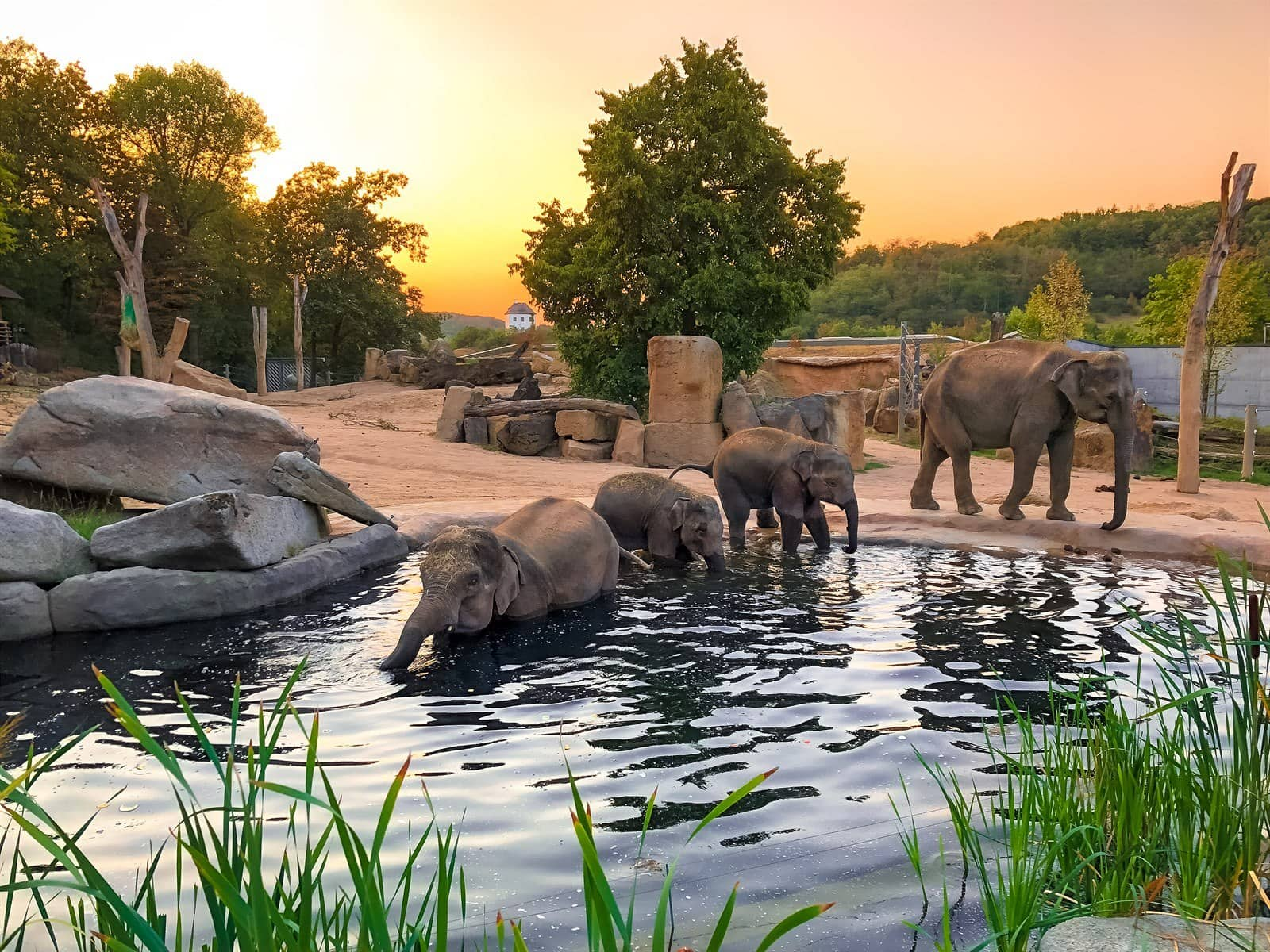 Prague Zoo expects two more elephants to be born in 2020