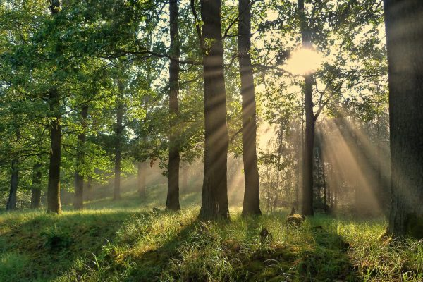 This weekend, help plant a 22nd-century forest for the Czech Republic