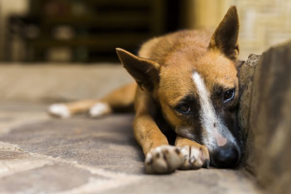 Dogs are now welcome in some Prague homeless shelters during the winter