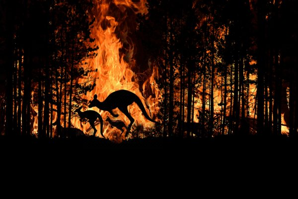 Bush fire in an Australian forest (Illustrative image)