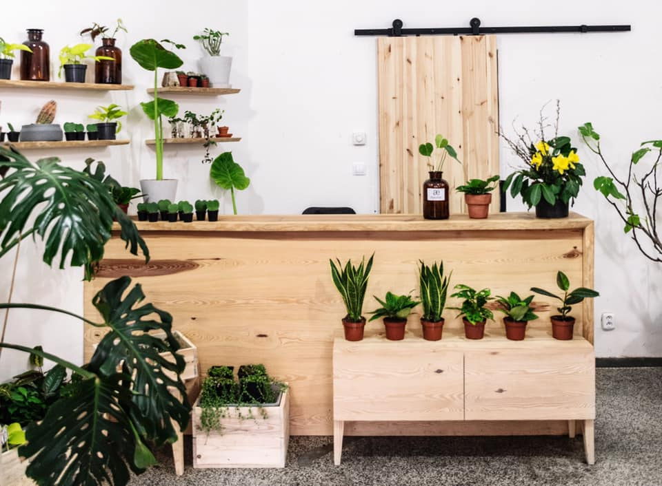 , Post-lockdown green therapy: Plant swapping events are blossoming all over Prague, Expats.cz Latest News & Articles - Prague and the Czech Republic, Expats.cz Latest News & Articles - Prague and the Czech Republic