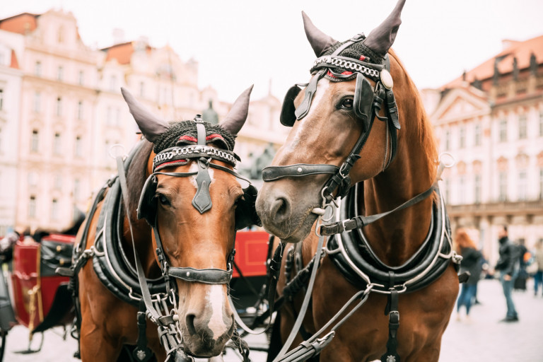 Prague, Czech Republic. Two Horses In Old-fashioned Coach At Old Town Square.